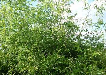 Pflanzen 3