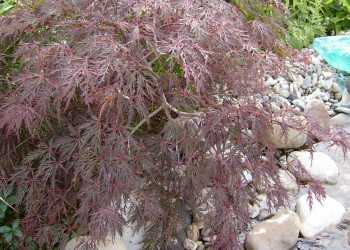 Pflanzen 19