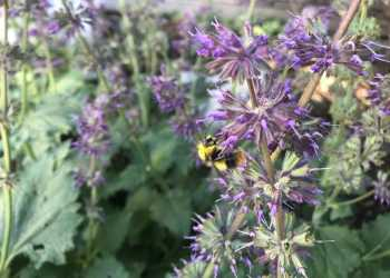 Bienengärten 5