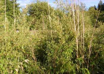 Pflanzen 33