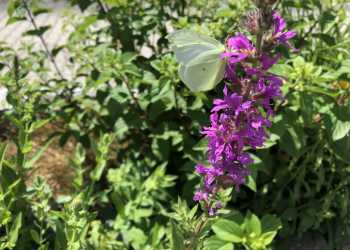 Bienengärten 4