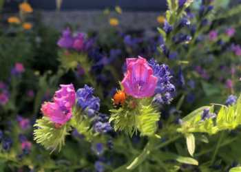 Bienengärten 7
