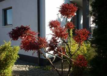Pflanzen 8