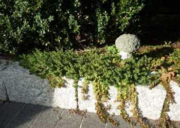 Gartenmauern 38