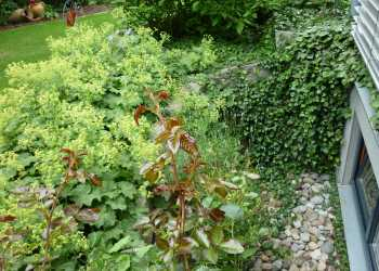 Pflanzen 14