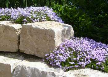 Gartenmauern 56